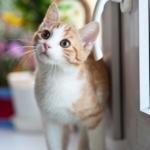 ネコの健康を考えよう【安すぎる餌はヤバいのでそこそこ安くてネコの健康にもいいご飯を紹介します】