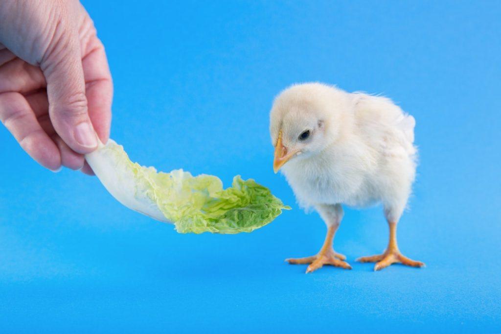 レタスは意外と栄養豊富